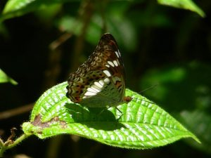 Butterfly and leaf