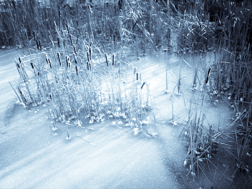 Snow Rushes