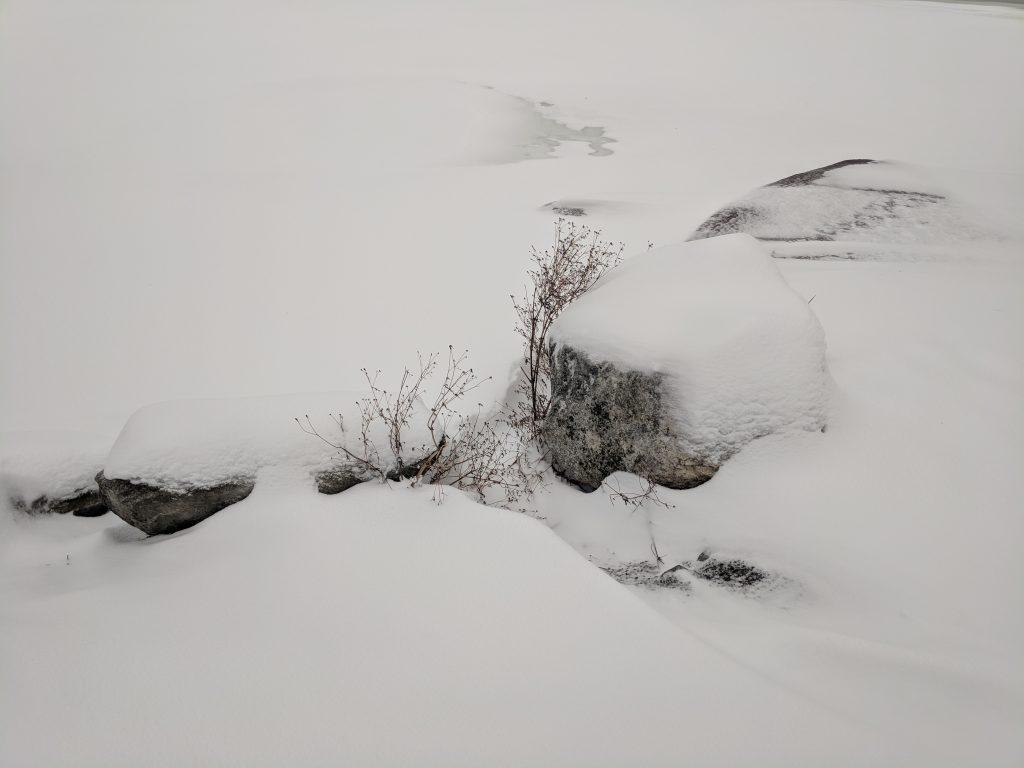 Winter, awaiting metamorphosis
