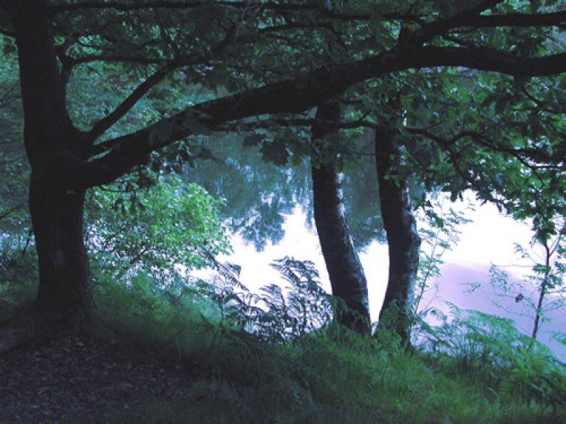 Tarn reflections